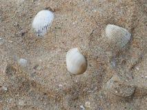 Lata tło z dennym piaskiem i skorupami fotografia stock