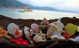 Lata tworzenie na plaży z dennymi naturalnymi istotami Fotografia Stock