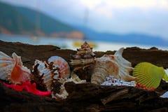 Lata tworzenie na plaży z dennymi naturalnymi istotami Zdjęcia Stock