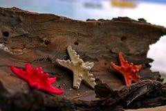 Lata tworzenie na plaży z dennymi naturalnymi istotami Obrazy Stock