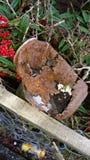 Lata velha oxidada Fotos de Stock