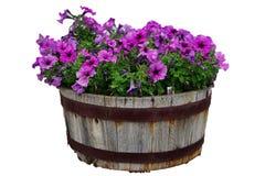 Lata, wiosny kwiatu garnki odizolowywający na białym tle/ obrazy royalty free