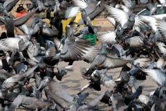Latający gołębie w grupie fotografia stock