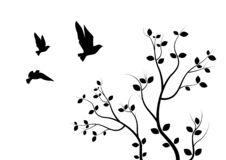 Latający ptaki Na gałąź, Ścienni Decals, sztuka projekt, Latający ptaki na Drzewnej ilustracji pojedynczy białe tło royalty ilustracja