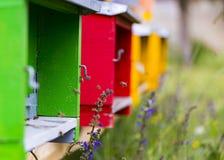 Latająca pszczoła przy jej rojem obrazy stock