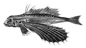 Latająca ryba ilustracja wektor
