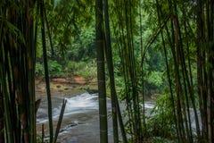 Latająca siklawa w Bambusowym lesie Bambusowy Denny teren wewnątrz Obrazy Royalty Free