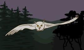 Latająca sowa z szeroko rozpościerać skrzydłami Obrazy Royalty Free