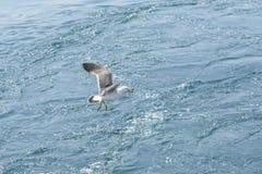latającego ptaka mewa niebo czyste obraz royalty free