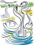 Latający łabędź i inni piękni łabędź Fotografia Royalty Free