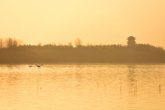 Latający łabędź i wierza Zdjęcie Royalty Free