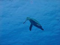latający żółw Obraz Stock