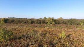 Latający above pola i drzewa zbiory wideo