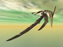 latający dinosaura pteranodon Fotografia Royalty Free