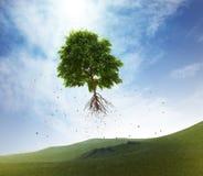 Latający drzewo Zdjęcia Stock