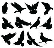 Latający gołąbek wektorowe sylwetki odizolowywać Gołębie ustawiający i pokojów symbole kochają Zdjęcie Stock