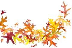 Latający jesień liście Fotografia Stock