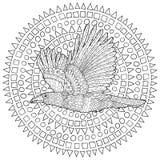 Latający kruk z wysokimi szczegółami Obrazy Royalty Free
