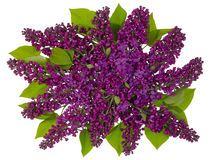 Latający lily bukiet obrazy royalty free