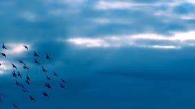 LATAJĄCY MAGICZNI ptaki Folowali HD zbiory wideo