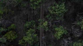 Latający oddalony antena strzał Aktywnej sporty rudzielec dziewczyny wygodny kłaść na koronie sosna w Iglastym lesie zbiory