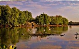 Latający ptaki po środku pięknego jeziora zdjęcia stock