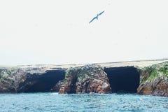 Latający ptaki przy wyspą Obrazy Royalty Free