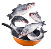 Latający seabass łowi spadać w smaży nieckę Ścinek ścieżka obrazy stock