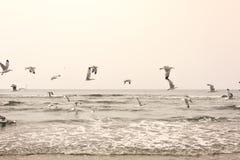 Latający seagulls przy plażą Zdjęcia Stock
