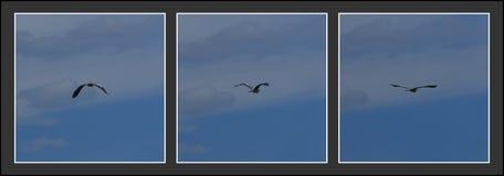 latający siatki seagull nieba wektor zdjęcia royalty free
