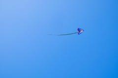 Latająca kania w niebie Zdjęcie Royalty Free