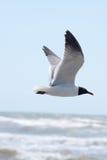 latającego ptaka mewa niebo czyste zdjęcia royalty free