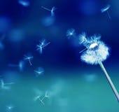 latający dandelion spadochrony Zdjęcia Stock
