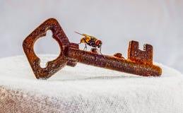 Latający klucz Fotografia Stock