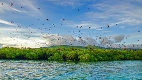 Latający lisy na tle mangrowe Obraz Stock