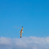 latający ocean Zdjęcie Royalty Free
