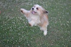 Latający pies! zdjęcie stock