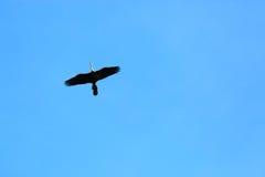 Latający ptak Zdjęcia Royalty Free
