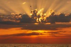 Latający ptak przy zmierzchem nad morzem Fotografia Stock