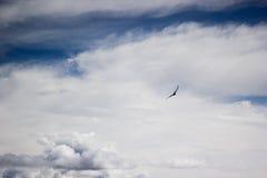Latający ptak w niebie Zdjęcia Stock