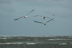 Latający ptaki Obrazy Stock