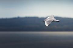 Latający ptaki zdjęcie stock