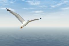 latający seagull Obraz Stock