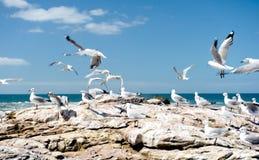 Latający Seagulls Obrazy Royalty Free
