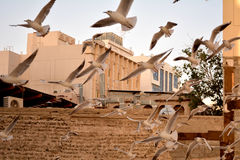 Latający Seagulls Zdjęcie Stock