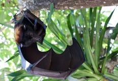 Latający pies Zdjęcia Royalty Free