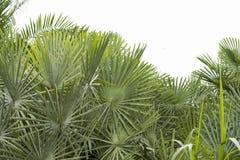 Latar-belakang tropis musim panas Yang-hijau dengan daun Dan-tanaman palem Yang-eksotis lizenzfreie stockfotografie
