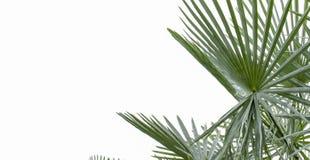 Latar-belakang tropis musim panas Yang-hijau dengan daun Dan-tanaman palem Yang-eksotis lizenzfreies stockbild