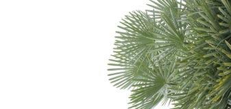 Latar-belakang tropis musim panas Yang-hijau dengan daun Dan-tanaman palem Yang-eksotis stockbilder