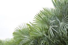 Latar-belakang tropis musim panas Yang-hijau dengan daun Dan-tanaman palem Yang-eksotis lizenzfreie stockfotos
